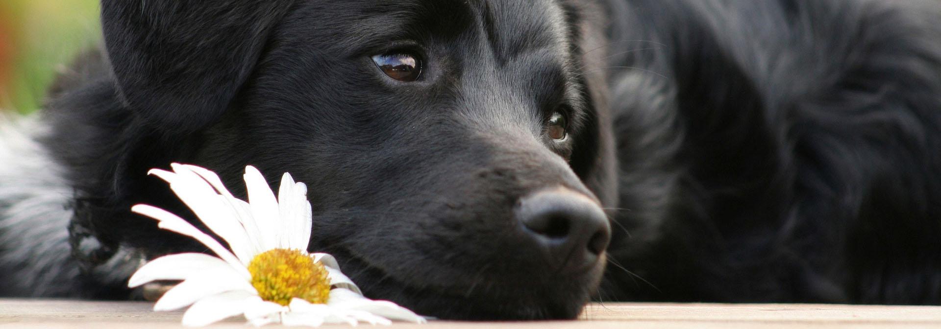 Тест на сообразительность собаки