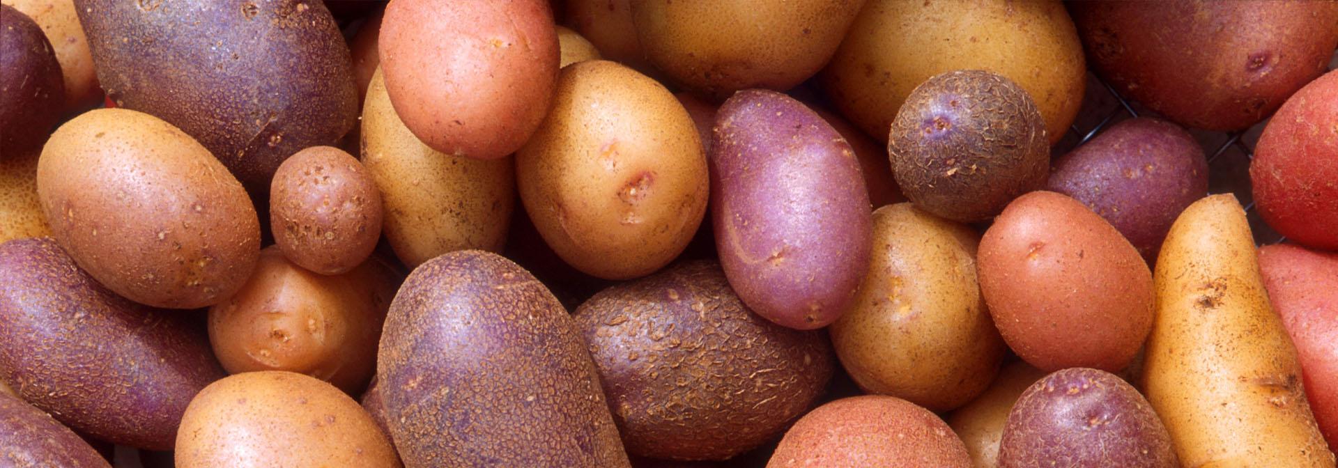 Картофель в корме